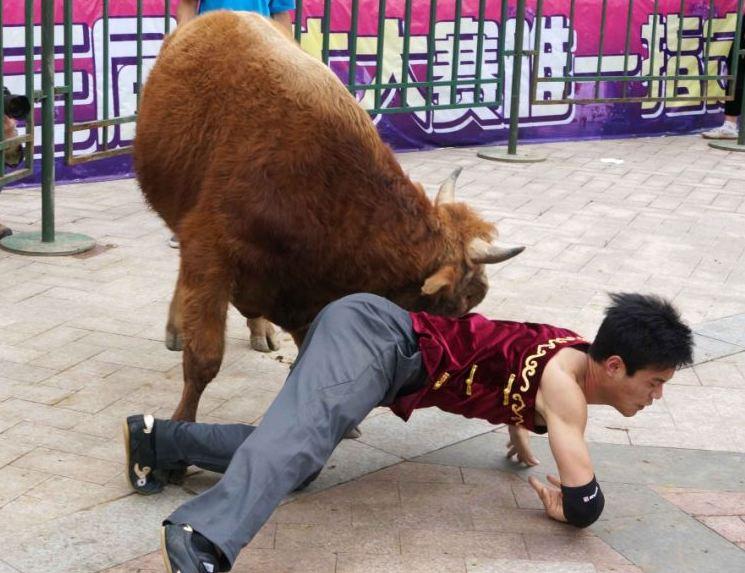 Chinese Bull-Wrestling
